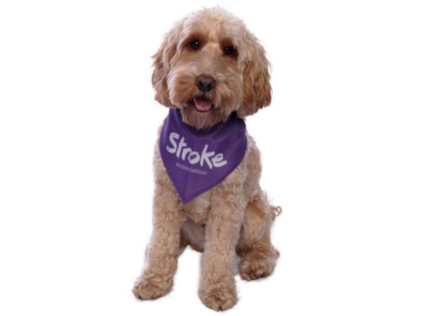 Image of a dog wearing the dog bandana