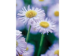 Image of Floral Notelet card – pictures of flowers on a card for all occasions.